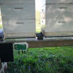 Top-Tipps für die Bienenzucht